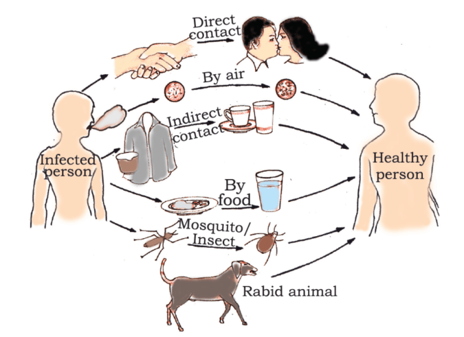 Common methods of disease transmission