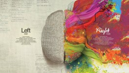 cerebral Brain Hemispheres Illustration Desktop Wallpaper