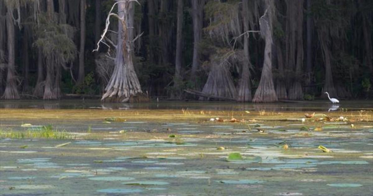 Nature Caddo Lake Texas Cbs News