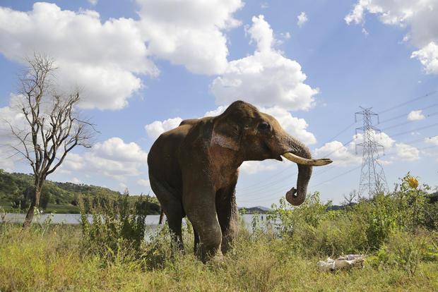 APTOPIX India Elephant Photo Gallery