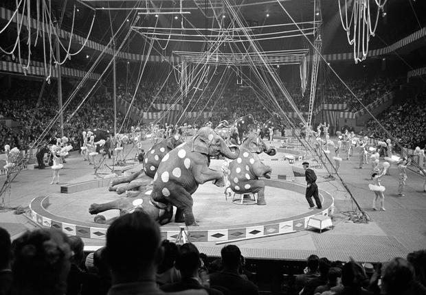 Clown Ringling Brothers Circus