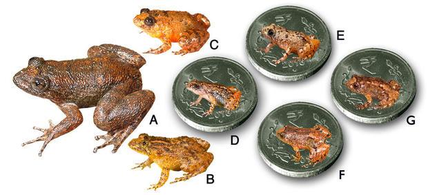 tiny-frogs-10.jpg