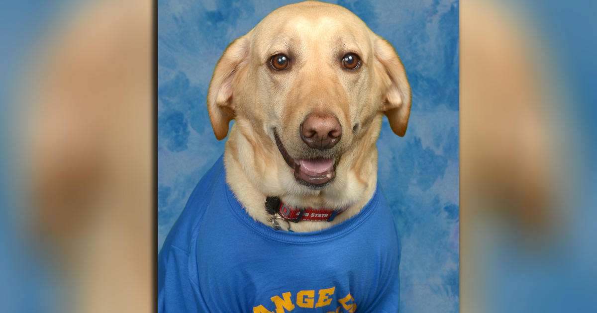 Beloved Service Dog Gets Picture In Florida Elementary Schools Yearbook CBS News
