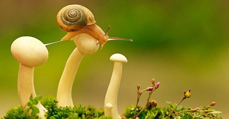 Especie de caracol es el primer animal extinto de 2019, piensan clonarlo