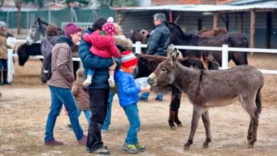 Los burros también en peligro de extinción, conoce el santuario de estos animalitos rescatados de la tristeza