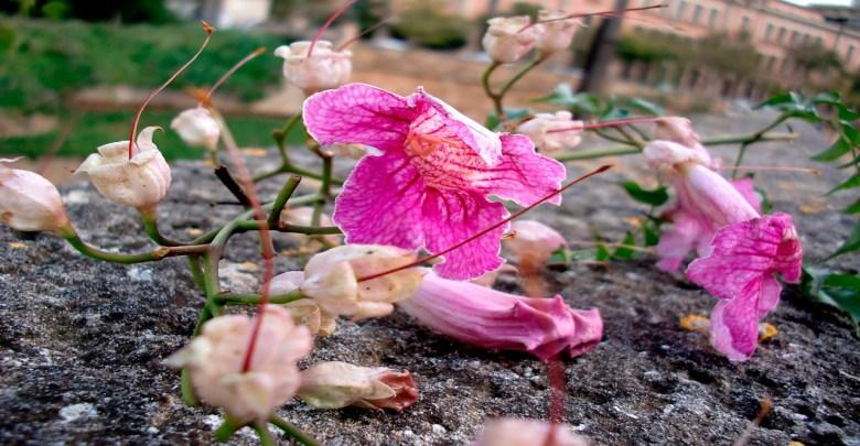 Las plantas también se encuentran en peligro de extinción