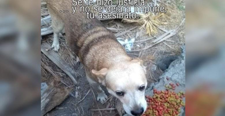 Por primera vez en México un hombre va a prisión por matar un perro