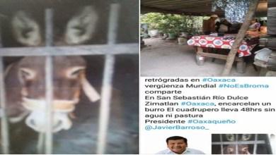 Policías arrestan a burro en Oaxaca; pasa 48 horas sin agua ni alimento