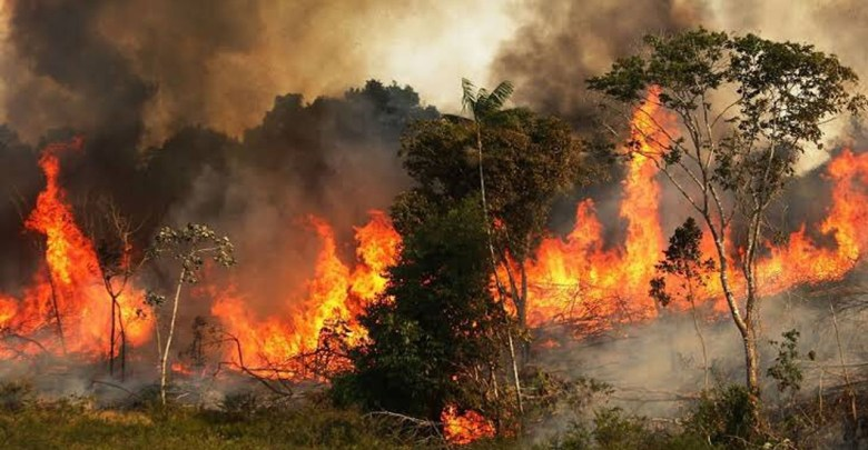 Video: Así el fuego consume la Amazonía; lleva 16 días de incendios