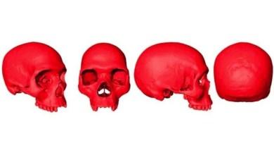 Reconstruyen virtualmente cráneo del ancestro del Homo Sapiens