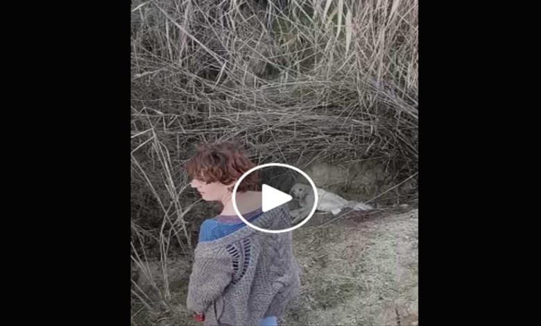 Video: Rescatan a perrito que fue enterrado vivo