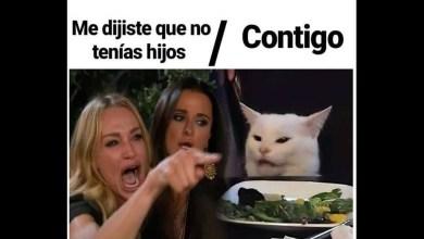 Photo of ¡En redes sociales celebran a los felinos con sus mejores memes!: Día Internacional del Gato