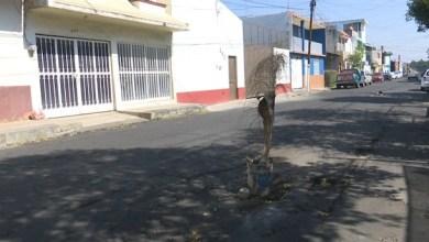 Photo of Vecinos de la calle Alberto Alvarado tapan baches con palmeras