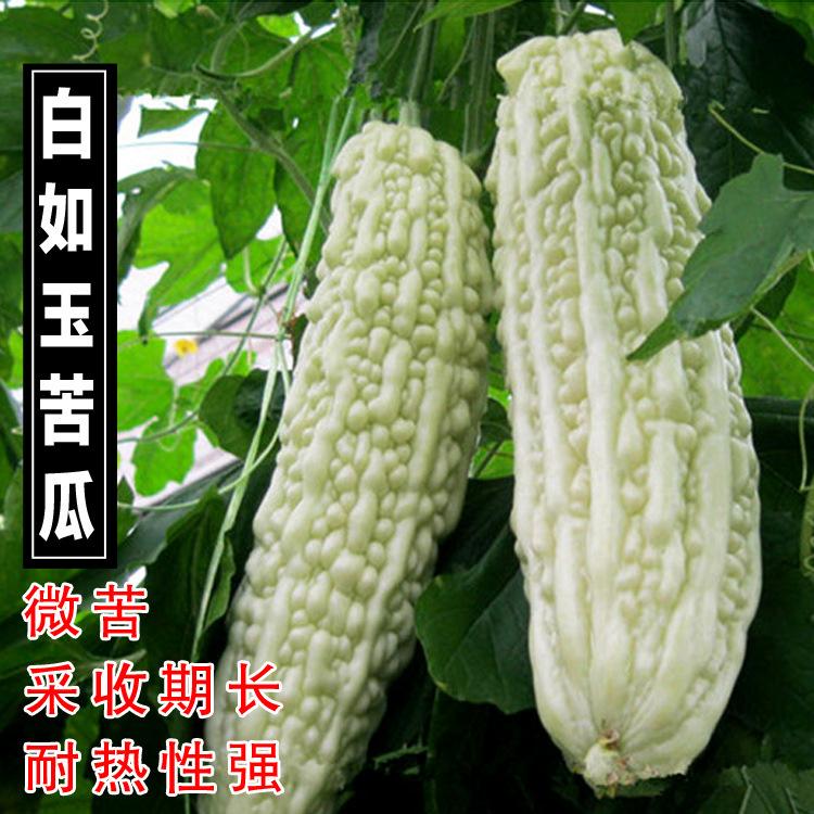【長白苦瓜種子】肉質鮮嫩白色苦瓜大田庭院白皮四季播種蔬菜種孑-阿里巴巴