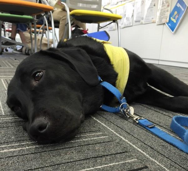 【チームわんわん】介助犬デモンストレーション @長久手CCC