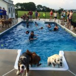 dogs at dog pool in Manheim, PA