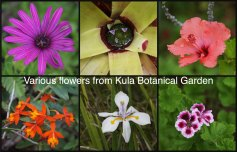 Kula Botanical Garden Flowers collage