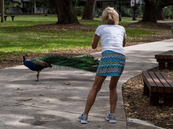 Two peacocks?