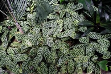 Interesting leaf pattern