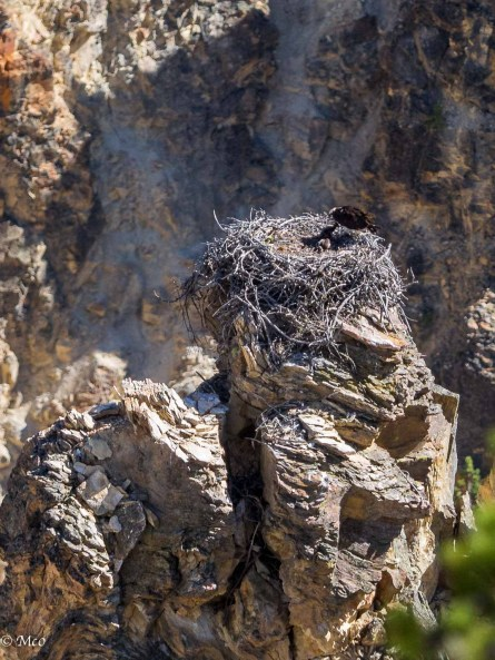 No daymarks here, but these rocks look safe for this Osprey and chicks