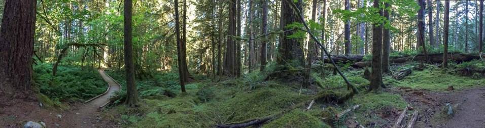 Ancient Grove Trail