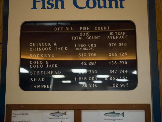 Manual Fishcount