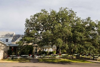 LBJ Ranch: This is where LBJ held meetings, under this oak