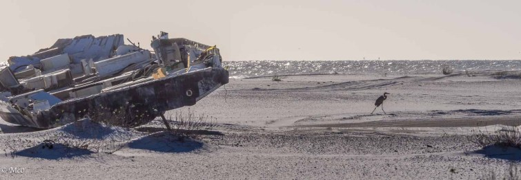 Heron leaving the sunk ship
