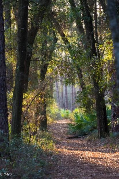 Wright Lake Trail