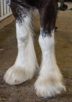 Big hooves