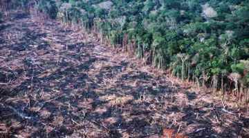 1-felling-in-APA-Triunfo-do-Xingu-credit-blog-da-Floresta-