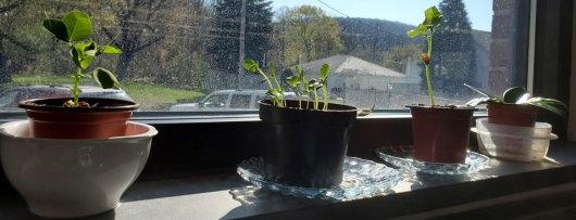 Four Seedlings