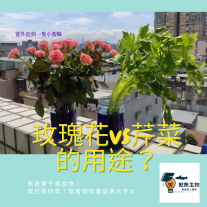 Read more about the article 108課綱生物教學大集合