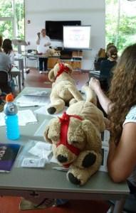 pet first aid class