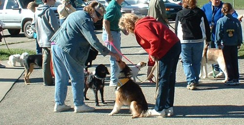 Woman giving dogs a treat