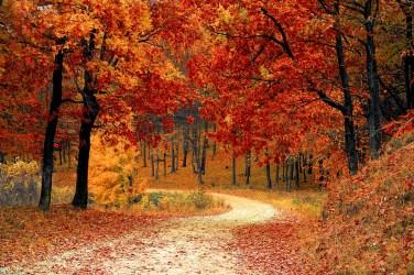 Path winding amid fall foliage