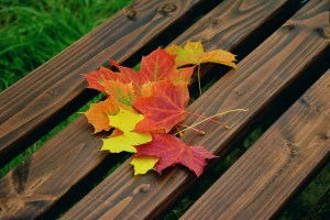 Red and yellow fall leaves on a bench