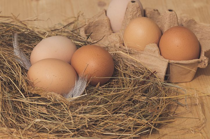 Brown eggs on a nest