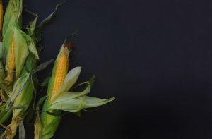 corn cob on black background