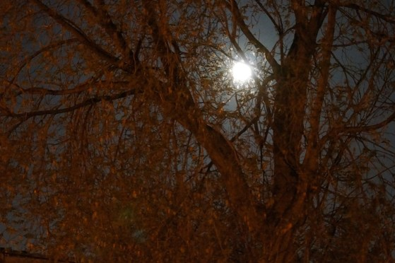The moon through tree branches, I think