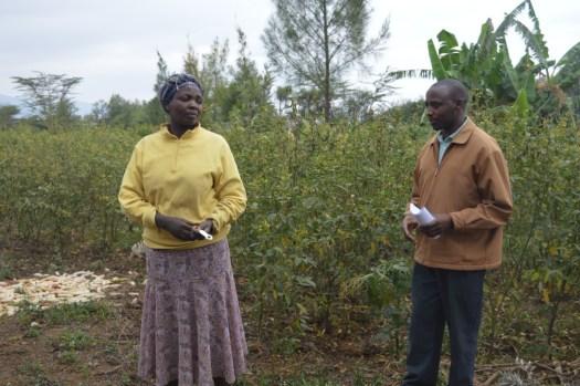 Lillian Wambui's farm