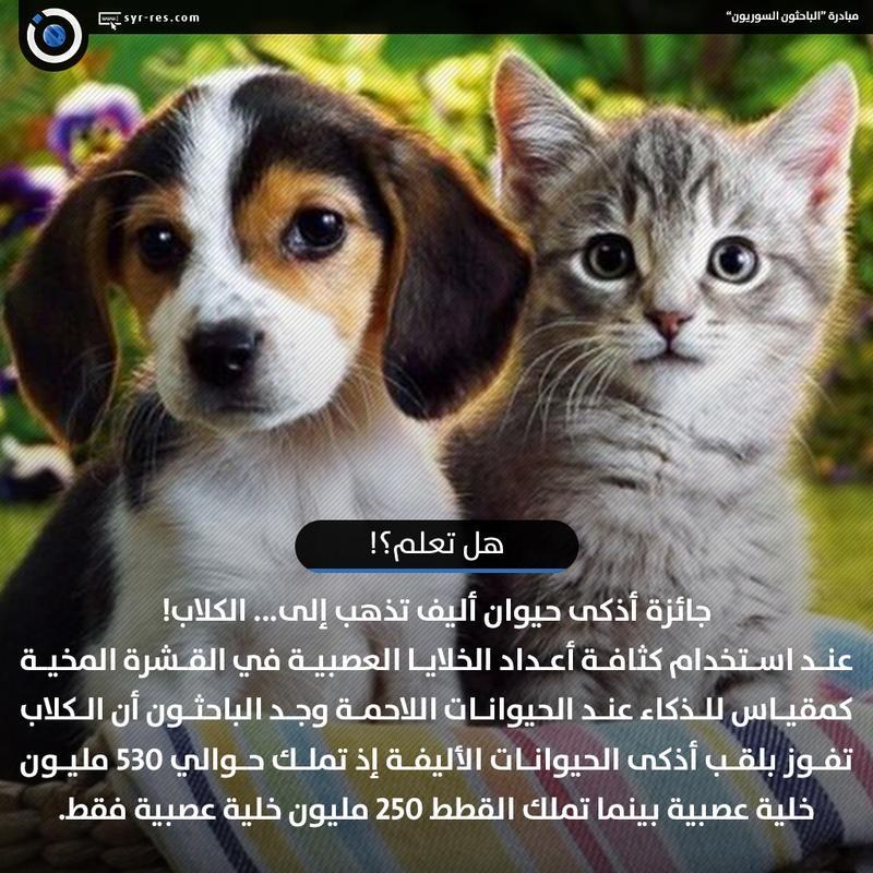 هل تعلم عن الحيوانات للحيوانات انواعا مختلفه كيوت