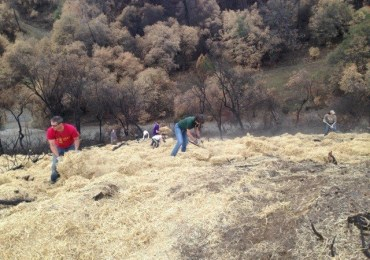 CCWD Assists Butte Fire Recovery Efforts of CalaverasGROWN