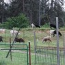CCWD Attends Sheep Ranch Community Meeting