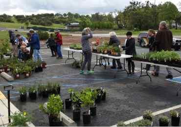 Saturday's Native Plant Sale a Success