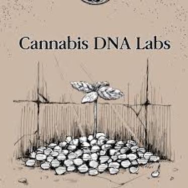 "Cannabis DNA labs 大麻栽培 種 ar Twitter: ""国内最安値観賞用大麻 ..."