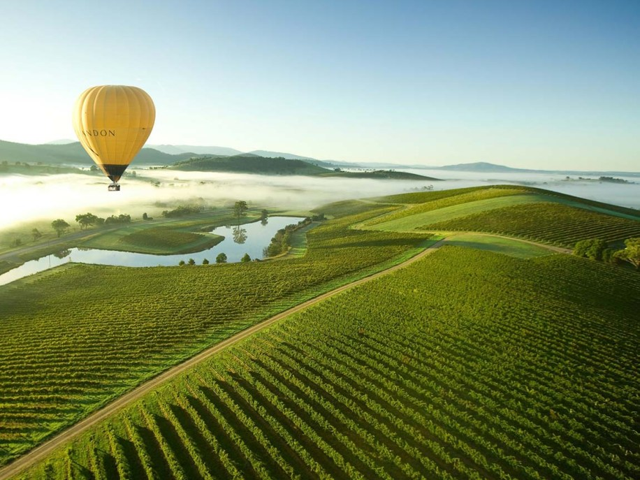 Yellow hot air balloon over foggy vinyards
