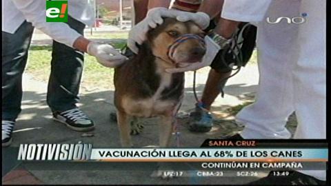 Más de 280.000 mascotas ya tienen vacuna antirrábica en Santa Cruz