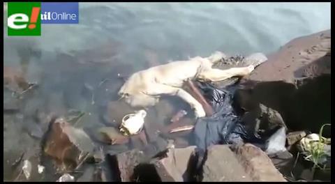 """¿Es real? Filmaron a un """"chupacabras"""" flotando en un río"""