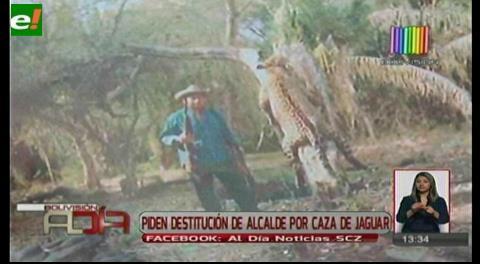 Piden destitución de alcalde por caza de jaguar